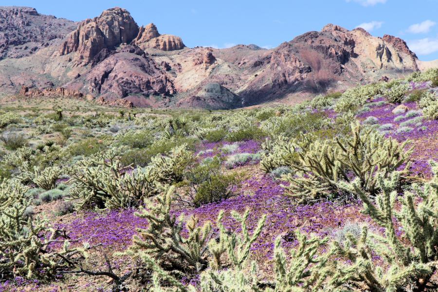 Spirit of Nevada Spotlights the Proposed Avi Kwa Ame National Monument